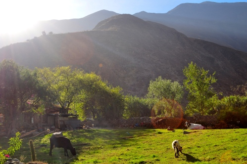 Churin in den Anden (Oktober,2014)