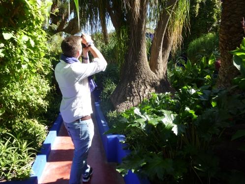 Ein Mittag im Garten von Yves Saint Laurent - Jardin Majorelle- Marrakech  (Herbst 2013)