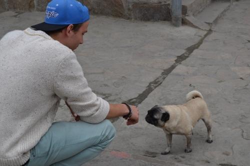 neue Freunde - Lima