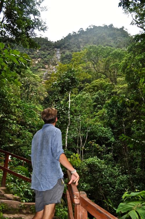 Hakuna Matata - Im Regenwald